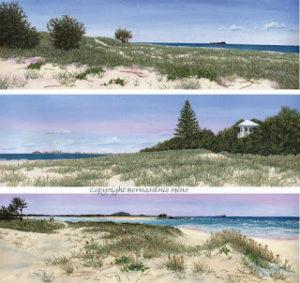 Beach Panoramas