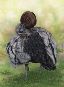 The Holmes Prize for Realistic Australian Bird Art
